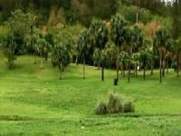 montpolier-arboretum-gardens-and-arboretums-bm