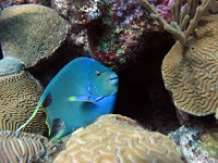 bermuda-institute-of-ocean-sciences-children's-museums-bm