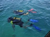 blue-water-divers-and-watersports-bermuda-scuba-diving-bm